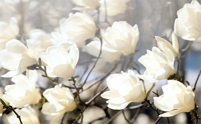 A brief history of dying dying consciously white flowers mightylinksfo